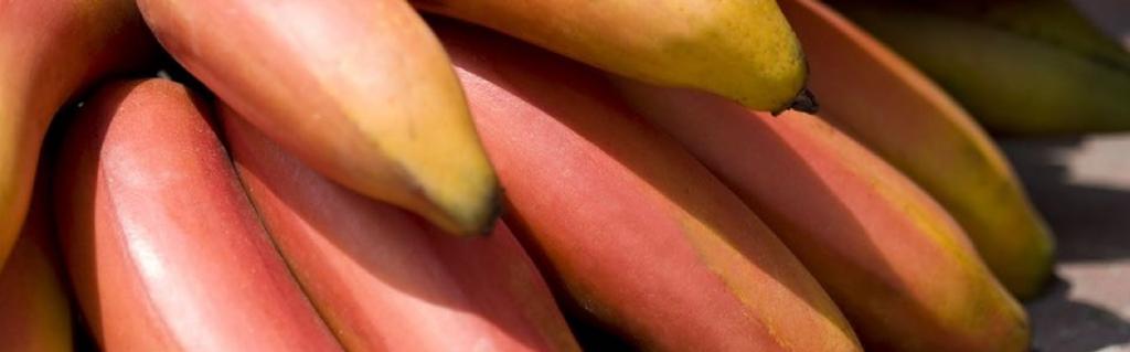 Jak chutnají červené banány?