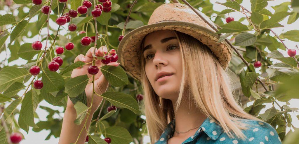 Léto, sladké třešně a pár zajímavostí
